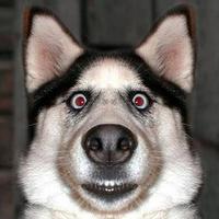 Cão Impressionado